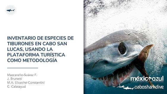 Cabo Shark Dive | Home | Shark Diving, Scuba, Cabo San Lucas